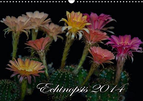 Echinopsis 2016 (Wandkalender 2016 DIN A3 quer): Kakteen Blüten (Monatskalender, 14 Seiten) (CALVENDO Natur)