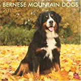 Bernese Mountain Dogs 2011 Calendar
