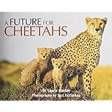 Future for Cheetahs