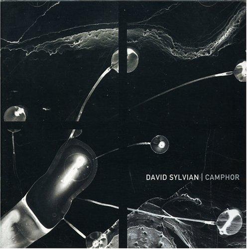 David Sylvian - Camphor - Lyrics2You
