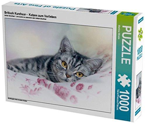 britisch kurzhaar katzen zum verlieben 1000 teile puzzle. Black Bedroom Furniture Sets. Home Design Ideas