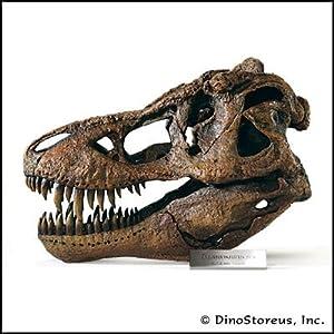 Amazon.com: Tyrannosaurus Rex Skull Model, 1/4 Scale: Industrial & Scientific