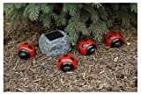Perfect Ladybug Solar 4-pack LED Light Set