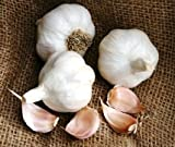 *Organic* Softneck Garlic Italian Late - Perfect for Braiding & Mild Climates - 1/2 lb. bag Garlic Bulbs for Planting!