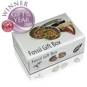 Junior Geo Fossil Gift Box