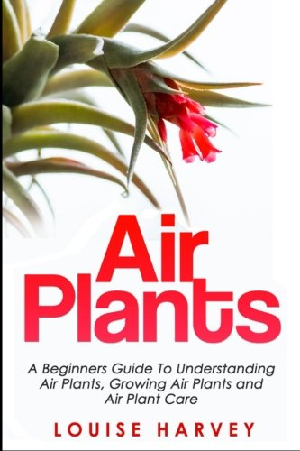 air-plants-a-beginners-guide-to-understanding-air-plants-growing-air-plants-and-air-plant-care