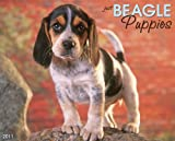 Beagle Puppies 2011 Wall Calendar (Just)