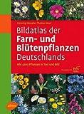 Bildatlas der Farn- und Blütenpflanzen Deutschlands: Alle 4200 Pflanzen in Text und Bild - Henning Haeupler, Thomas Muer