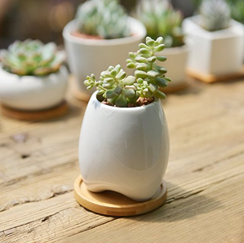SUN-E Modern White Ceramic Succulent Planter Pots / Mini Flower Plant Containers with Bamboo Saucers (Oval)