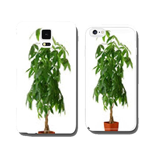 houseplant-pachira-aquatica-a-potted-plant-isolated-over-white-cell-phone-cover-case-iphone5