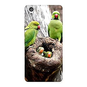 Special Parrot House Multicolor Back Case Cover for OnePlus X