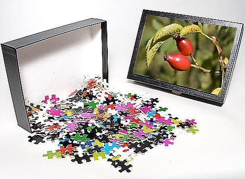Photo Jigsaw Puzzle Of Mab-848 Closeup Bright Red Rose Hips Or Haws On Wild Dog Rose