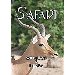 Safari Wild Dogs And Impala