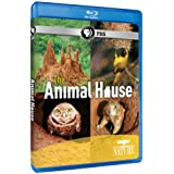 Nature: The Animal House [Blu-ray]