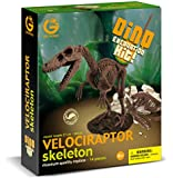 Geoworld Dino Excavation Kit - Velociraptor Skeleton