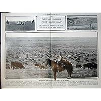 1907 頭の群れのビーフの雄牛の牛 Prarie モンタナアメリカの人