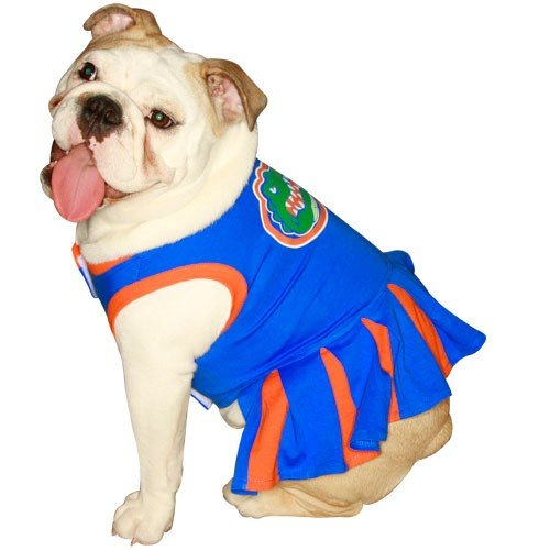 NCAA University of Florida Gators Cheerleader Dog Outfit, Medium