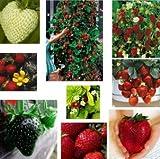 Erdbeere Samen Mischung