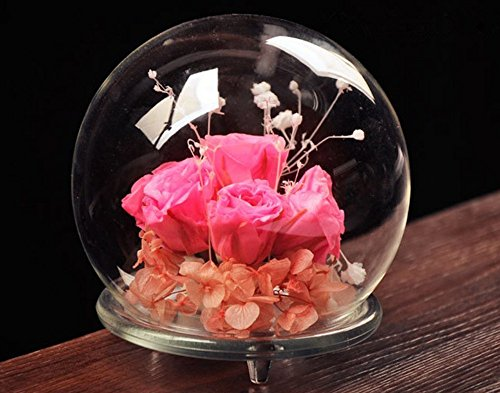 NIVIY Glass Dome Display Transparent Glass Cloche/Bell Decorative Glass Domes for Home D¨¦cor (FLOWER not INCLUDE) (Pedestal Glass Orb compare prices)