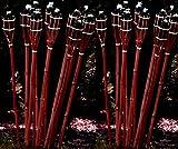 21 x Gartenfackel 90 cm ROTBRAUN Bambusfackel STAR-LINE® Bambus Garten