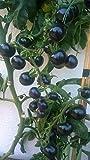 Indigo Rose 10 Samen ---Die etwas andere Tomatensorte mit violetter