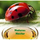 Live Ladybugs - Approximately 4500 + Hirt's Nature NectarTM