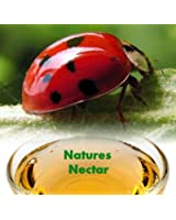 Live Ladybugs - Approximately 4500 + Hirt's Nature NectarTM
