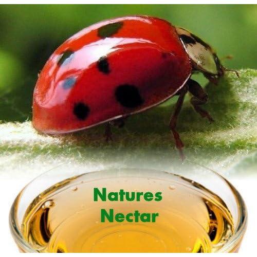 Live Ladybugs - Hirts Gardens - Approximately 1550 -Plus Hirts Nature NectarTM