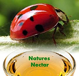 Live Ladybugs - Approximately 1550 + Hirt's Nature NectarTM