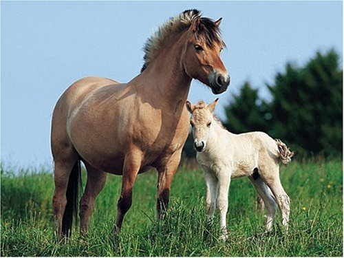 Norwegian Mare and Foal Jigsaw Puzzle 500pc - Buy Norwegian Mare and Foal Jigsaw Puzzle 500pc - Purchase Norwegian Mare and Foal Jigsaw Puzzle 500pc (RVB, Toys & Games,Categories,Hobbies,Hobby Tools)