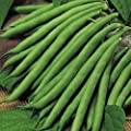 Premier Seeds Direct Climbing French Bean Blue Lake includes 300 Seeds