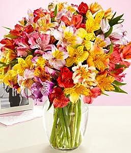 Amazon.com : 100 Blooms of Peruvian Lilies : Fresh Cut Format Mixed