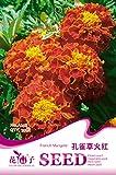 Amazon / Hankuke: Tagetes patula Seeds of 500,Hankuke Biennial Series Farm, Ranch, Patio, Lawn Garden Vegetables Herbs Flowers Plants Germination Seeds - French Marigold