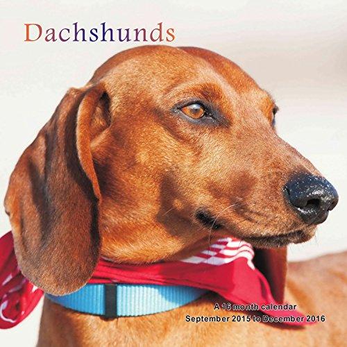Dachshunds Calendar - 2016 Wall calendars - Dog Calendars - Monthly Wall Calendar by Magnum PDF