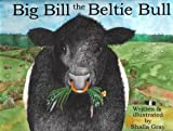 Shalla Gray Big Bill the Beltie Bull