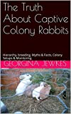 The Truth About Captive Colony Rabbits: Hierarchy, breeding, Myths & Facts, Colony Setups & Monitoring.