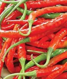 Cayenne Long Red Pepper (75 Days) 200 Seeds By Jays Seeds Upc 643451294675