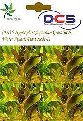 DCS(037) 5 Pepper plant Aquarium Grass Seeds Water Aquatic Plant Seeds-12