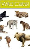 Wild Cats: Lions, Panthers, Cheetahs and More!