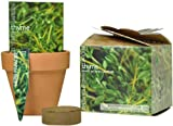 S.F. Imports GB-THYME/MD Grow Your Own Medium Herb Kit, Thyme