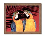 Tropical Macaw Parrots Birds Animal Wildlife Home Decor Wall Picture Oak Framed Art Print