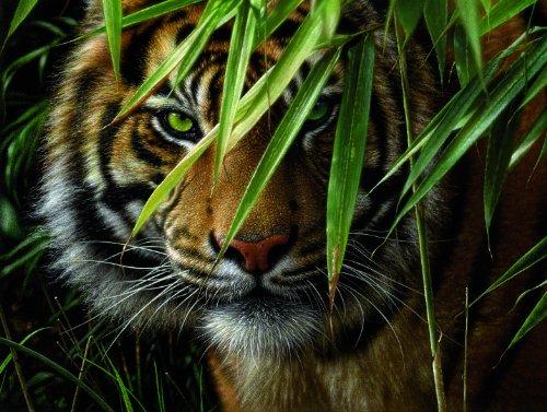 Mammut 108007 - Malen nach Zahlen groß Artists Collection - Tiger