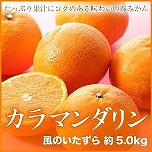 【訳あり】愛媛県中島産 春のみかん 『カラマンダリン』 風のいたずら (約5.0kg)