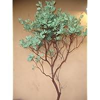 Manzanita Branches 61