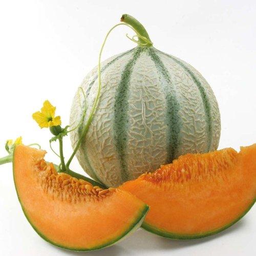 zuckermelonen orange beauty f1 hybride balkon melonen. Black Bedroom Furniture Sets. Home Design Ideas