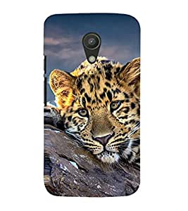 99Sublimation Resting Leopard 3D Hard Polycarbonate Back Case Cover for Motorola Moto G2 :: 2nd Gen :: G XT1068 :: G 2nd Gen :: G Dual SIM 2nd gen :: G Dual SIM 2014