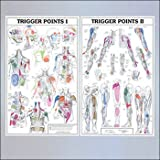 Trigger Points I and II Laminated Chart/Posters