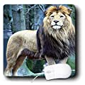 3dRose LLC 8 x 8 x 0.25 Inches Mouse Pad, Lion The King (mp_580_1)