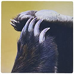 3dRose LLC 8 x 8 x 0.25 Grizzly Bear Paws and Claws Jim Goldstein Mouse Pad (mp_87546_1)