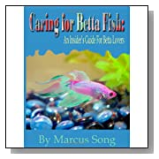 Caring For Betta Fish [Paperback]